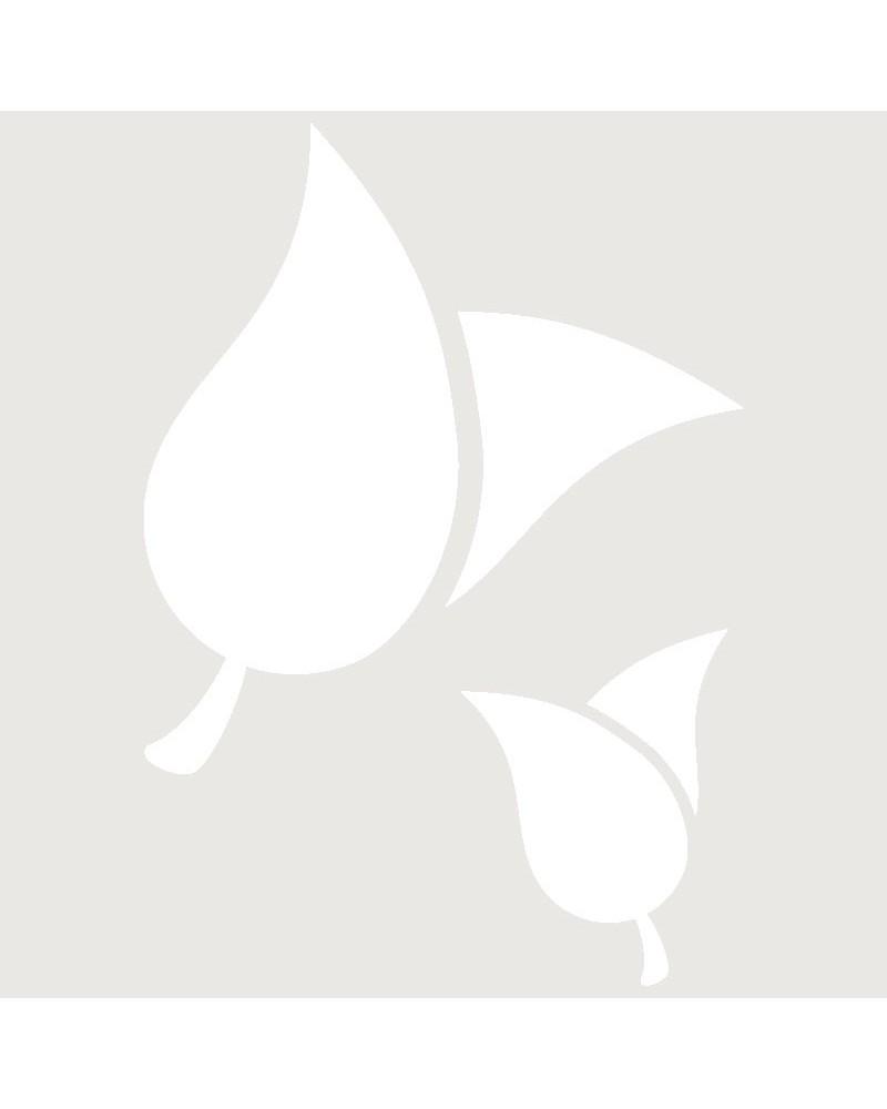 Stencil Aerografia Tattoo Floral 014